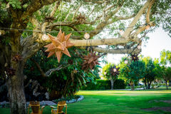 La Quinta, California. Tree hanging stars in green landscape Stock Photography