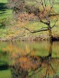La réflexion d'un arbre Image stock