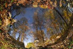 La réflexion dans l'étang est arrondie : les arbres grands le long du bord tendent vers le haut dans le ciel bleu, sur la surface Photos libres de droits