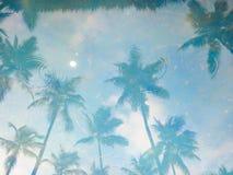 La réflexion dans les arbres de noix de coco de l'eau Image stock
