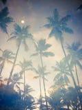 La réflexion dans les arbres de noix de coco de l'eau Image libre de droits