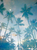 La réflexion dans les arbres de noix de coco de l'eau Images libres de droits