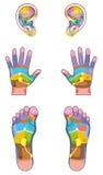 La réflexothérapie répartit en zones des pieds de mains d'oreilles Photographie stock