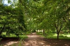 La région boisée marche par l'auvent des arbres Photo stock