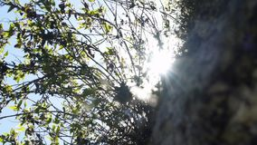La région de Cuzco entoure la nature et les paysages banque de vidéos