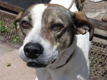 La région de l'Ukraine, Donetsk, Druzhkovka, chien triste observe Images stock