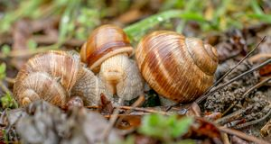 La réunion des escargots Photos libres de droits