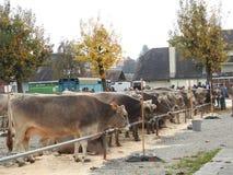 La réunion des vachers Image stock