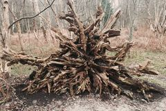 La raíz Foto de archivo