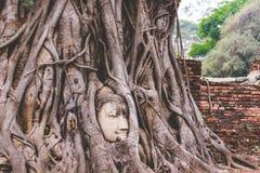 la raíz Buda Imagen de archivo