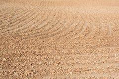 La raíz húmeda de la mandioca se está secando debajo del sol abrasador imágenes de archivo libres de regalías
