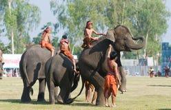 La raccolta annuale dell'elefante in Surin, Tailandia Immagine Stock Libera da Diritti
