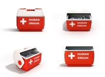 La raccolta chiusa 3d rosso del contenitore di frigorifero dell'organo umano rende sopra royalty illustrazione gratis