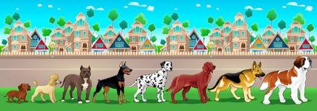 La raccolta dei cani di razza ha allineato sulla vista della città Fotografia Stock