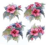 La raccolta dei fiori, foglie, germogli, si ramifica fiori dell'Egiziano rosso è aumentato Metta gli elementi dell'acquerello su  royalty illustrazione gratis