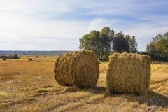 La raccolta del fieno per gli allevamenti Immagine Stock