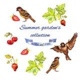 La raccolta del giardino di estate con il ribes, passeri, fragole, ciliege illustrazione di stock