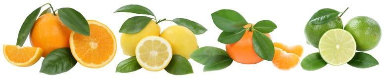 La raccolta del limone del mandarino delle arance fruttifica in una fila isolato sopra Immagini Stock Libere da Diritti