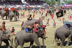 La raccolta dell'elefante di Surin fotografia stock