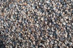 La raccolta delle conchiglie variopinte ha selezionato alla costa norvegese Fotografia Stock Libera da Diritti