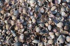 La raccolta delle conchiglie variopinte ha selezionato alla costa norvegese Fotografie Stock Libere da Diritti