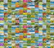 La raccolta delle foto della natura nel concetto del collage Immagini Stock Libere da Diritti