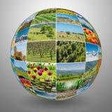La raccolta delle foto della natura nel concetto del collage Fotografia Stock Libera da Diritti