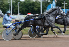 La race grise de trotteur d'Orlov de cheval dans la tache floue d'abrégé sur mouvement Photo libre de droits