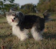 La race inconnue de chien est cheerfull et pose photo libre de droits