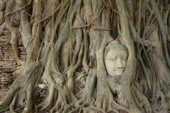 La racine autour de la tête de statue de Bouddha Photos stock