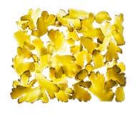 La racine de gingembre découpe la texture en tranches tirée au-dessus du fond clair Photos stock