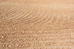 La racine moite de manioc sèche sous le soleil étouffant Images libres de droits