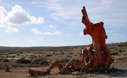 La radice dell'albero in un campo selvaggio Immagini Stock Libere da Diritti