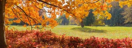 La radura nel parco di autunno con la quercia si ramifica nella priorità alta Immagini Stock Libere da Diritti
