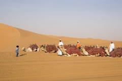 La ragazza accoglie favorevolmente i cammelli Fotografie Stock Libere da Diritti