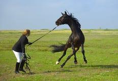 La ragazza addestra il cavallo Fotografie Stock