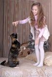 La ragazza alimenta il suo gatto Immagine Stock