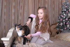 La ragazza alimenta il suo gatto Immagini Stock
