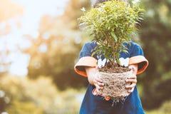 La ragazza asiatica del bambino che tiene il giovane albero per prepara la piantatura immagini stock libere da diritti