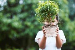 La ragazza asiatica del bambino che tiene il giovane albero per prepara la piantatura fotografia stock libera da diritti