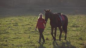 La ragazza cammina attraverso il prato con uno stallone marrone Movimento lento archivi video