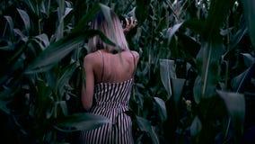 La ragazza cammina attraverso un campo di grano stock footage