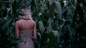 La ragazza cammina attraverso un campo di grano archivi video