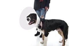 La ragazza cammina cane Fotografia Stock