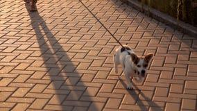 La ragazza cammina con il cane sul lungomare archivi video