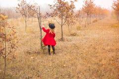La ragazza in cappotto rosso raccoglie le foglie cadute dagli alberi nel giardino di autunno fotografia stock