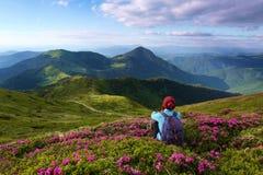 La ragazza in cappuccio e con un sacco posteriore sta sedendosi fra i cespugli dei fiori del rododendro Il paesaggio con le alte  Immagini Stock