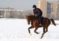 La ragazza che il equestrian salta su un cavallo immagini stock