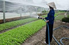 la ragazza coltiva le verdure pulite Fotografia Stock