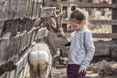 La ragazza con un cervo del bambino in una penna sta preoccupandosi e ciao Fotografie Stock Libere da Diritti